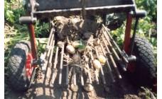 Каменская картофелекопалка для мотоблока Салют